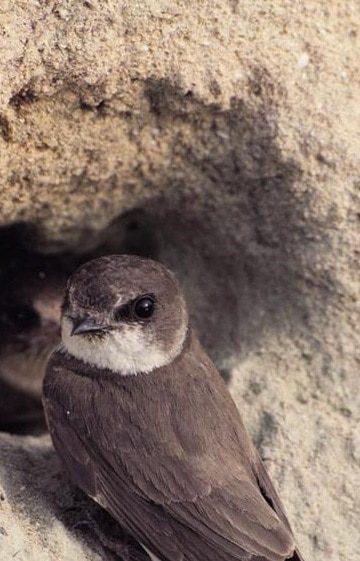 Collaboration with SEO/BirdLife