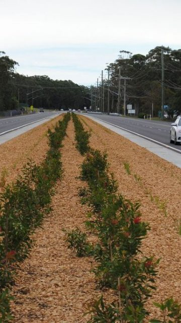 Nelson Bay Road Upgrade