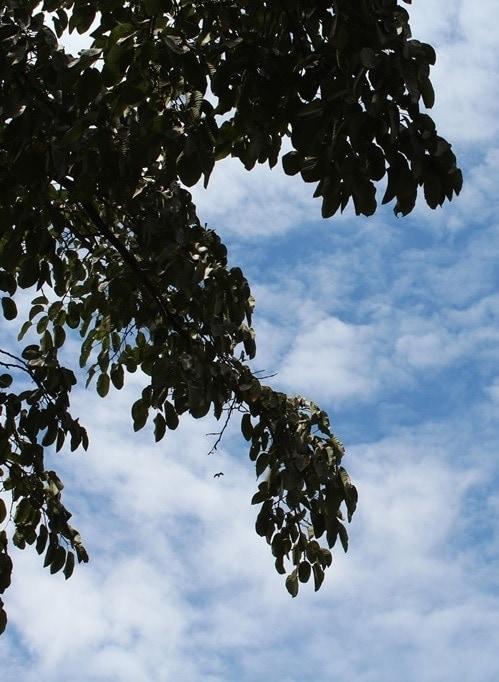 naturaleza arboles y el cielo de uganda