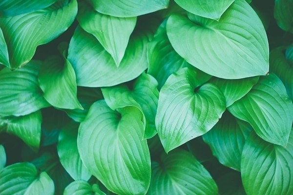 Vertical gardens plants