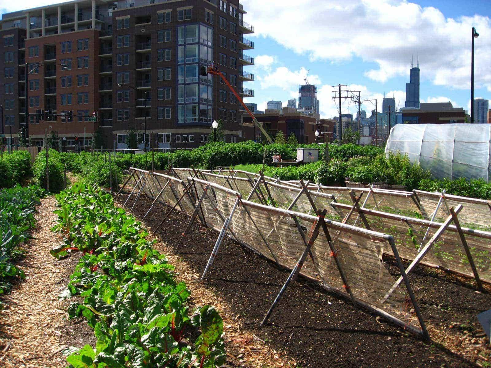cultivo vertical jardin urbano en chicago