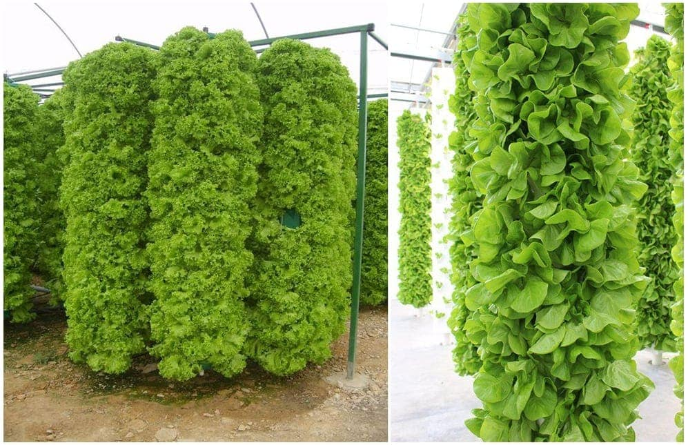 Vertical cultivation rotating crops