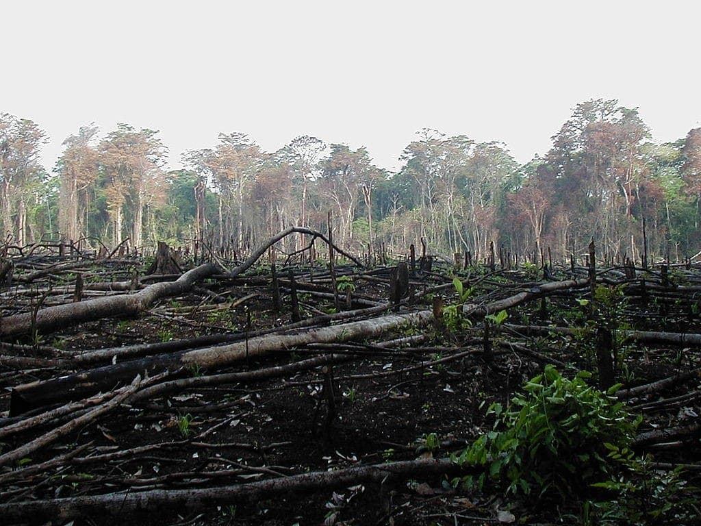 Vertical cultivation mexico jungle trees deforestation