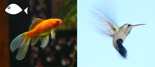 arquitectura biomimetica pez y ave
