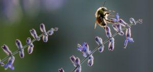 importancia insectos ecosistema medio ambiente