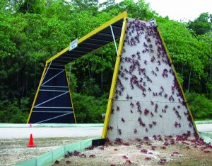 bridge for red crab on Christmas Island in Australia