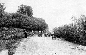 Carretera de las Angosturas, en Priego de Córdoba, a principios del siglo XX.