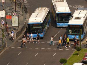 autobuses esperando en semáforo en rojo a que pasen los peatones