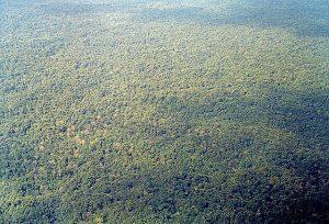 Aerial view of the Darién Gap in the region of Chocó, Colombia