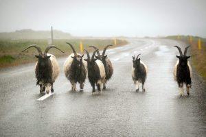 13,000 kilometers of roadways Iceland