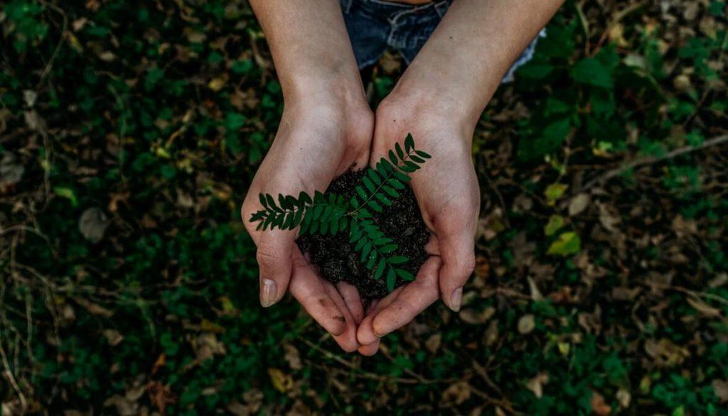 Imagen de unas manos que sujetan una planta con la tierra, vista desde arriba