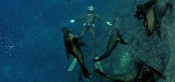 Nadando con leones marinos
