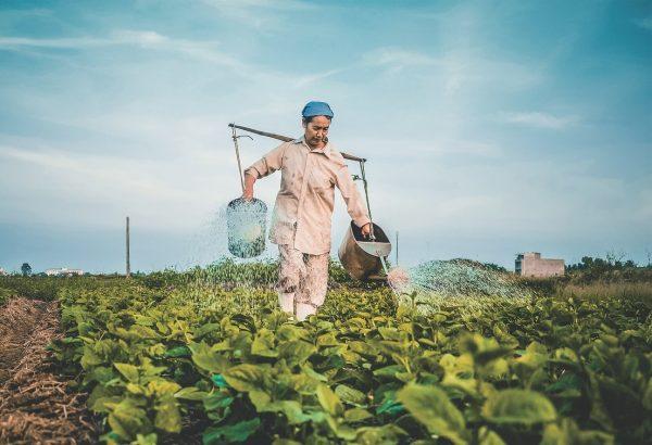 woman farmer watering