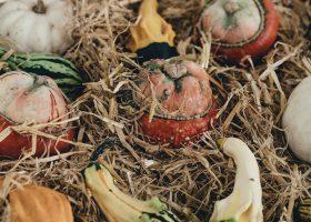 Fall vegetable harvest
