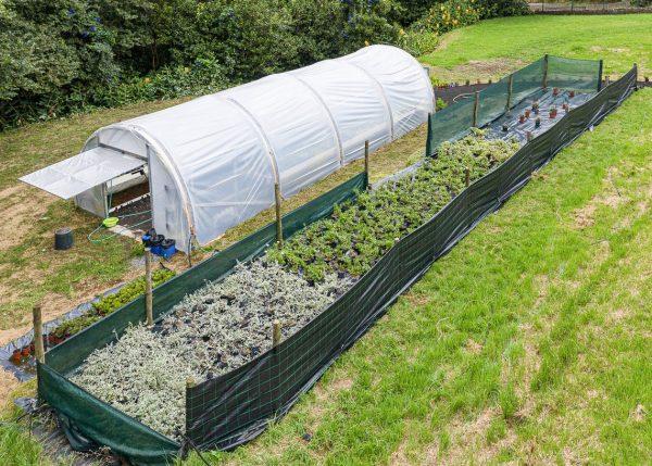 los invernaderos se construyen empleando barreras viales dañadas
