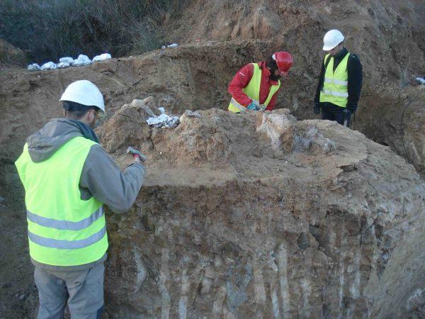 excavación paleontológica