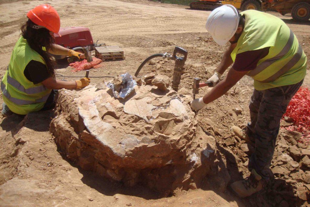 yacimiento paleontológico