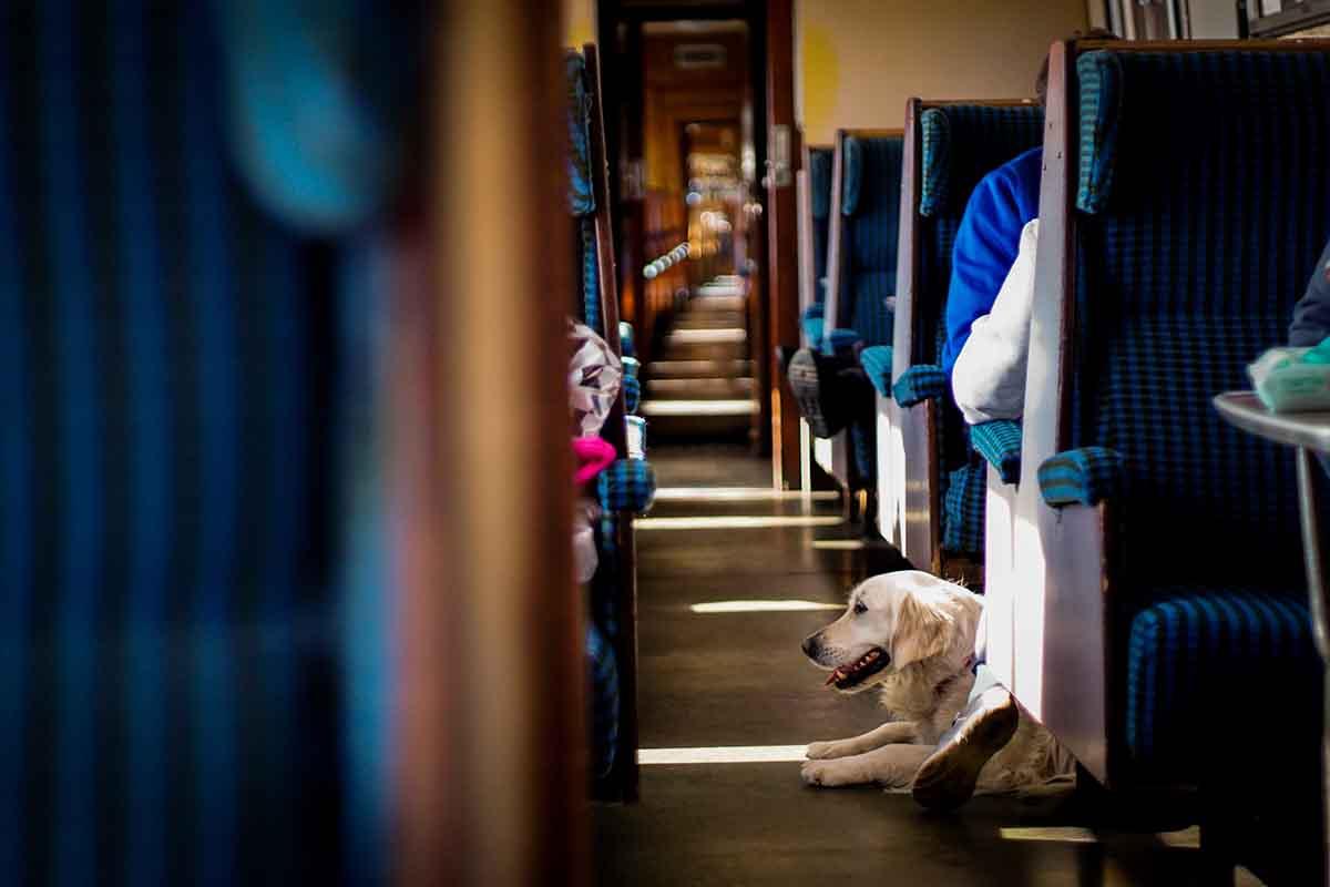 Un perro viaja sin necesidad de transportín en un tren en Escocia. John Crozier (Unsplash)