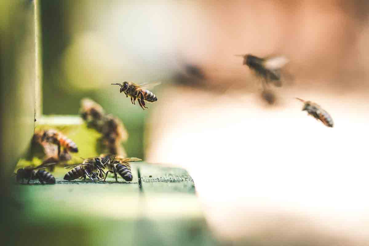 hoteles-de-abejas