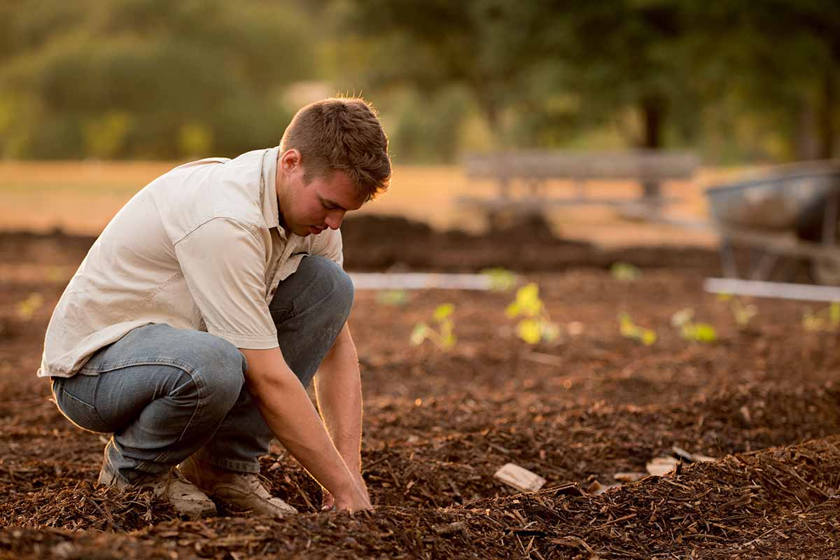 composting-environment