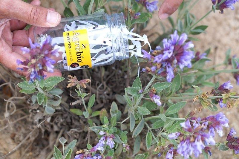 Almeria Parks and Gardens app to help with biological pest control