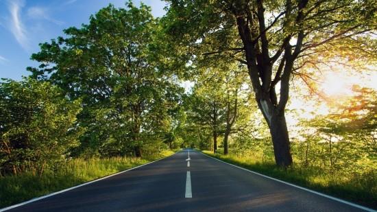 imagen autopista y un bosque